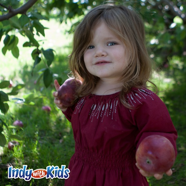Pleasant View Orchard | Apples For You to Pick Near Indy