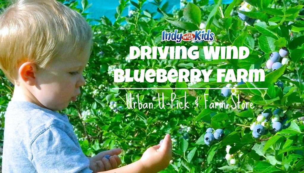 Driving Wind Blueberry Farm