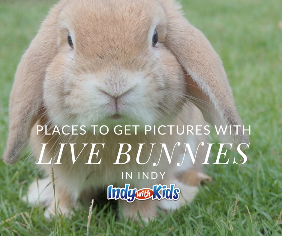 Places to Get Pictures with live bunnies easter