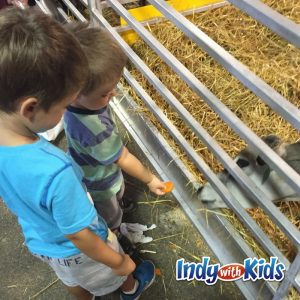 indianapolis-where-kids-can-see-animals-in-indianapolis-indy-pets-up-close-kids-child-moms