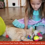 Nine Lives Cat Cafe | A Paws-itively Purrr-fect Place to Visit