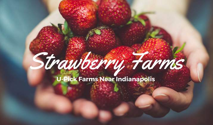 Best Places to Pick Your Own Strawberries in Indianapolis
