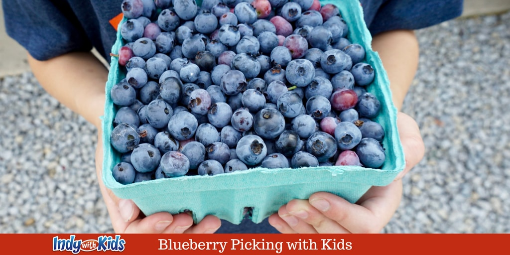 Pick Your Own Blueberries at Spencer Farm in Hamilton County