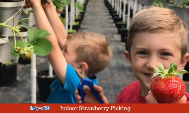 Indoor Strawberry Picking at Driving Wind Berry Farm